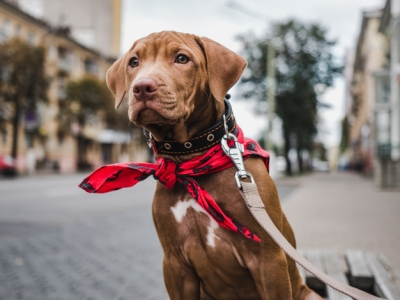 PET CHECK BLOG Dog tied up outside shop