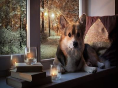 PET CHECK BLOG - CANDLES - Dog sitting next to candles