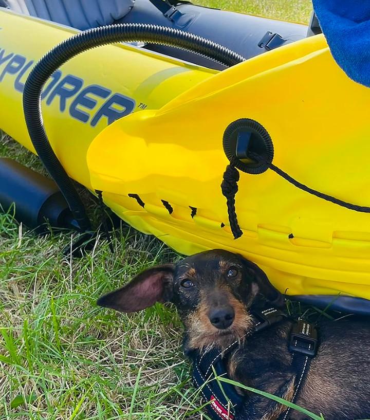 PET CHECK BLOG - Boating