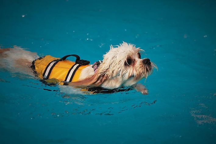 PET CHECK BLOG Dog Swim Day